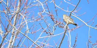 Free Guided Bird Walk