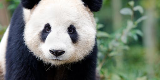 Fujifilm Zoo Photographic Experience