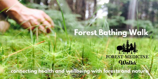 Muskoka Forest Bathing Walk