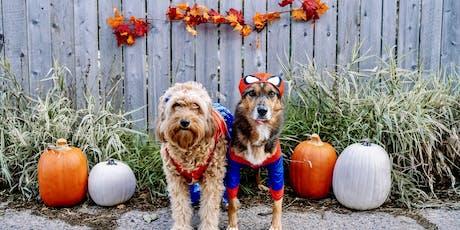 Dogs of MSP October Meet Up / Doggone Halloween tickets