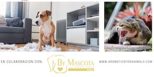charla de aromaterapia para mascotas
