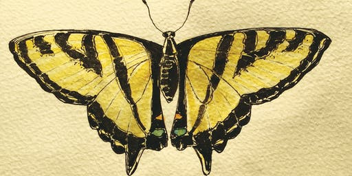 Nature Journaling: Iridescent Insects