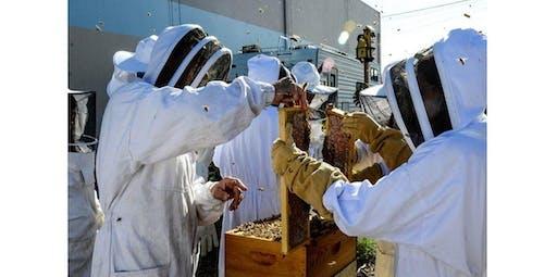 Basic Beginner Beekeeping Class Taught by Beekeeping Expert John McDonald (2019-11-09 starts at 12:00 PM)