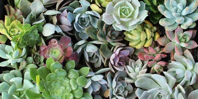 Succulent Workshop - Rancho San Justo PTO Fundraiser