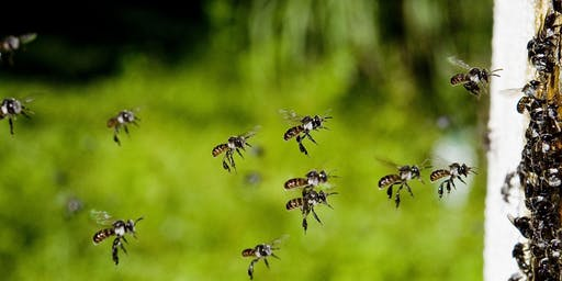 Australian Native Bee Workshop