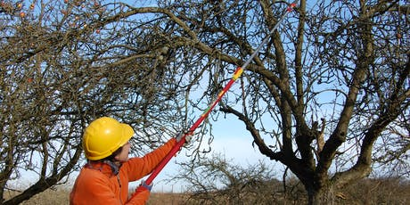 Learn to Prune Overgrown Old Fruit Trees (London) tickets