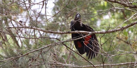 Crosslands Reserve Aussie Backyard Bird Count tickets