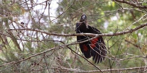 Crosslands Reserve Aussie Backyard Bird Count