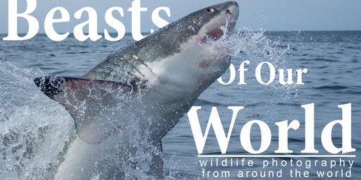 Beasts of Our World - wildlife photography exhibition