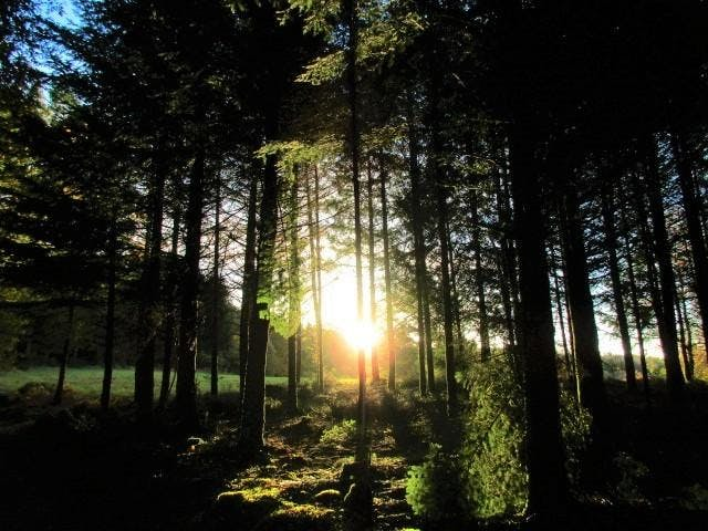 Sing from the Heart Singing and Meditation Retreat 10-15 March