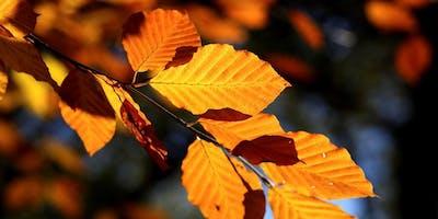 National Lottery #ThanksToYou Autumnal Sandwell Walk