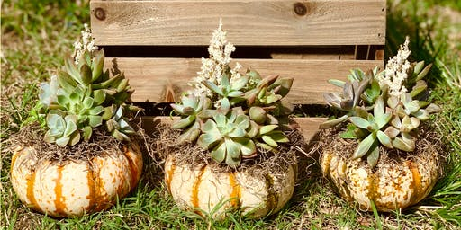 DIY Class: Trio of Succulent Pumpkins at The Station