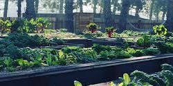 Renewable Farms SVA Community Service