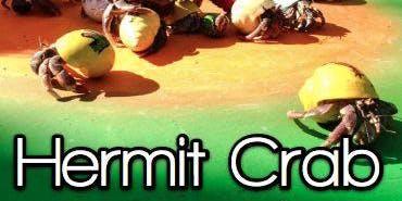 Hermit Crab Adoption
