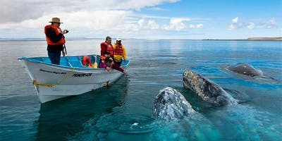 Whales Watching Baja California trip