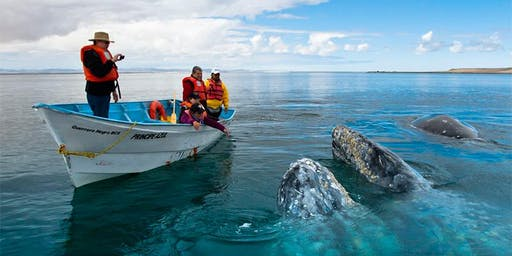 Whales Watching Baja California trip