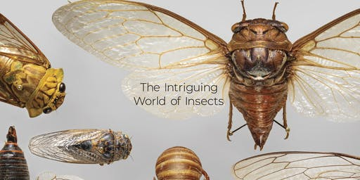 The Intriguing World of Insects: Lecture and Guided Tour