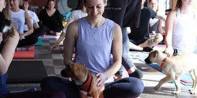 Doggy Noses & Yoga Poses - Barks, Bends, and Beer at Big aLICe Brewing!