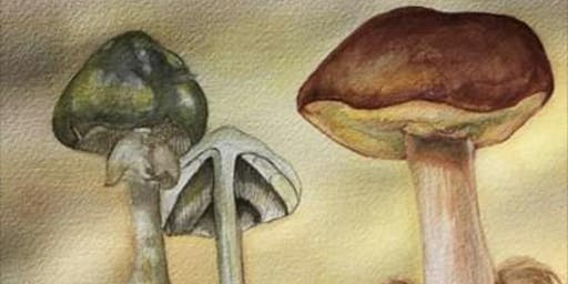 49th annual MSSF Fungus Fair ‒ December 8