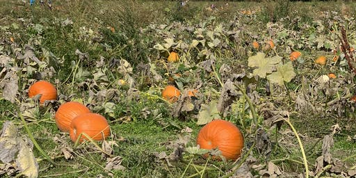 Fat Girls Hiking, Denver:  Rock Creek Farm Corn Maze