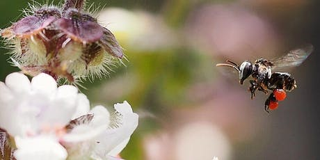 An Introduction to keeping native bees- Riverwood  tickets