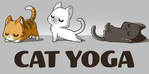 Cat Yoga Fundraiser