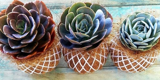 Succulent Cocodama Workshop