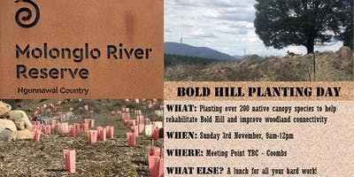 Bold Hill Planting Day - Enhancing the Molonglo Valley
