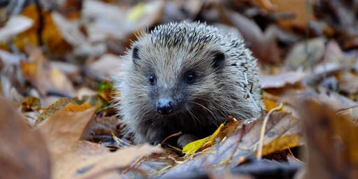 Naturehood Flo Park: How to help hedgehogs with Hugh
