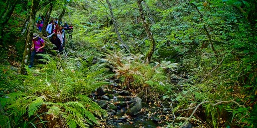 ActiveHike Βλαχοκερασια Jungle Autumn Edition