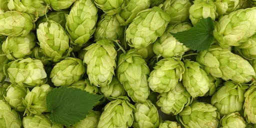 All About the Hop - History & Development of the IPA