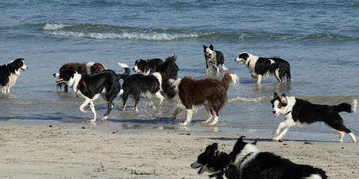 Border Collies Beach Walk for Borderline Personality Disorder (FREE)