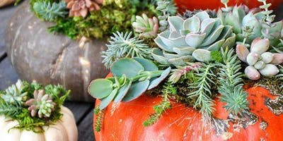 Pumpkin + Succulent Workshop