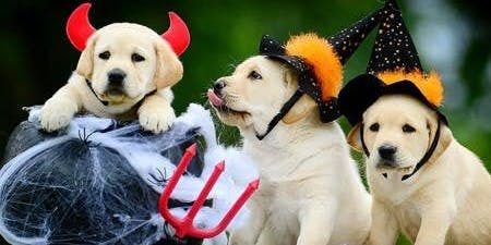 HALLOWEEN PAWTY: Dog Costume Contest/Pups & Pints