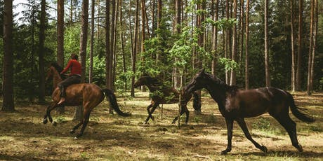 Out Stealing Horses:  Nordic Oscar Contenders Series tickets