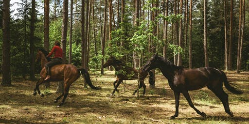 Out Stealing Horses:  Nordic Oscar Contenders Series