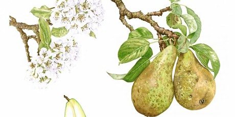 Apples & Pears in Coloured Pencil with Janie Pirie Day Workshop tickets