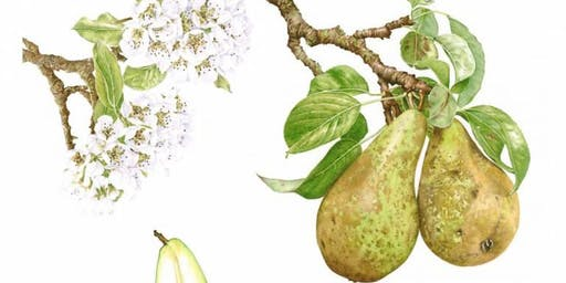 Apples & Pears in Coloured Pencil with Janie Pirie Day Workshop