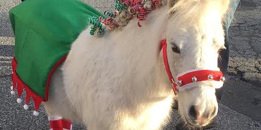 Christmas Visit from Lulu the Mini Horse