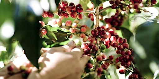 FARMING & SPECIALTY COFFEE- MONDAY