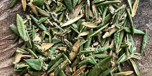 5@7 de cuisine boréale à la découverte des épices de la forêt