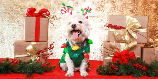 Howliday Pet Photos (Studio City)