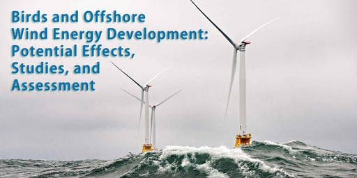 Birds and Offshore Wind Energy Development