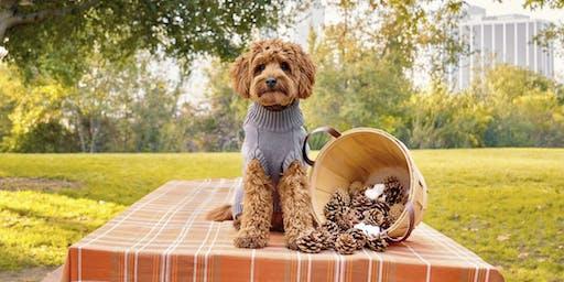 Pupsgiving Play Date (DTLA)