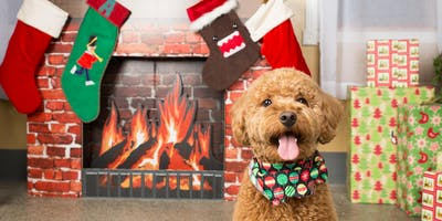 Howliday Dog Photo Shoot at Stay by Robyn White Photo