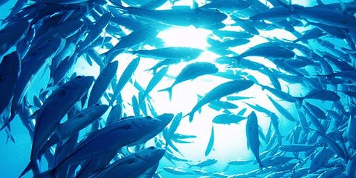 Sea Foods and Aquaculture 2020