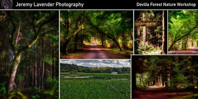 Nature trail in Devilla forest - Professional Landscape Photography Workshop for Beginners