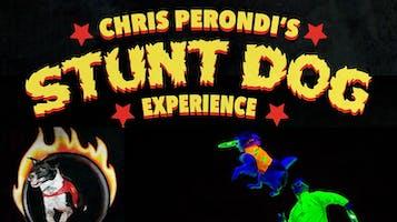 """Stunt Dog Experience"""