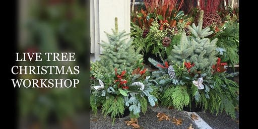 LIVE CHRISTMAS TREE WORKSHOP - $79 2 DATES