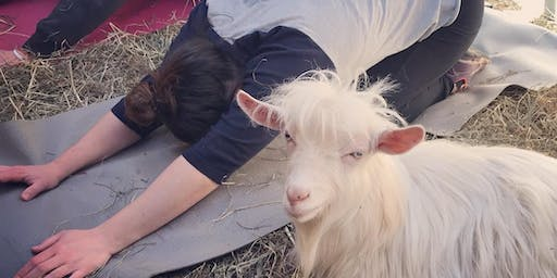Feels Like OM Goat Yoga